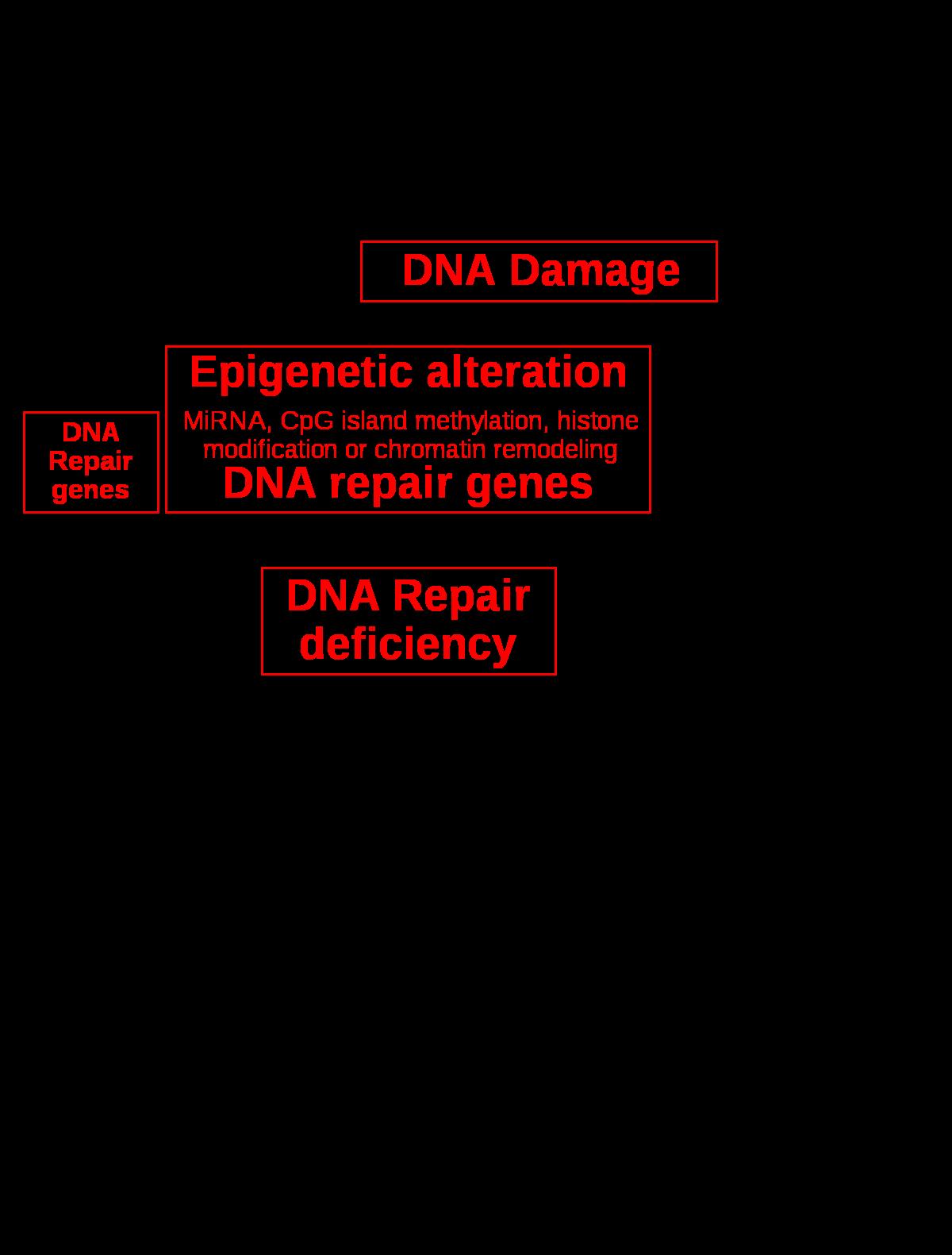 Öröklődés, genetikai vizsgálatok | setalo.hu