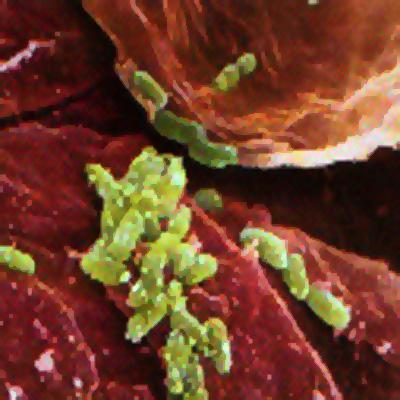parazita v blatu