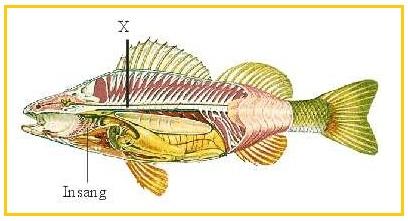 Diphyllobothriasis lokalizáció a testben