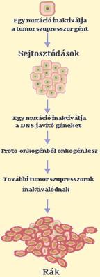 A hasnyálmirigyrák gyakorisága, okai és kezelési lehetőségei