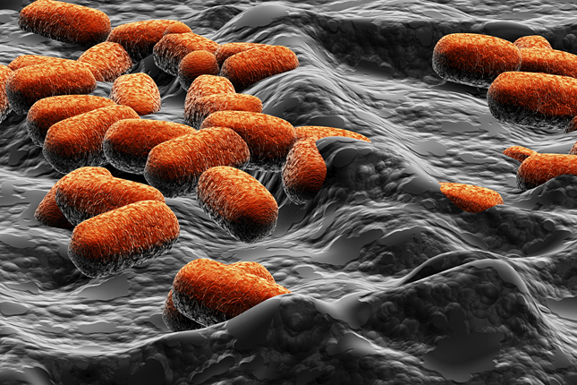 baktériumok baktériumok és psa)