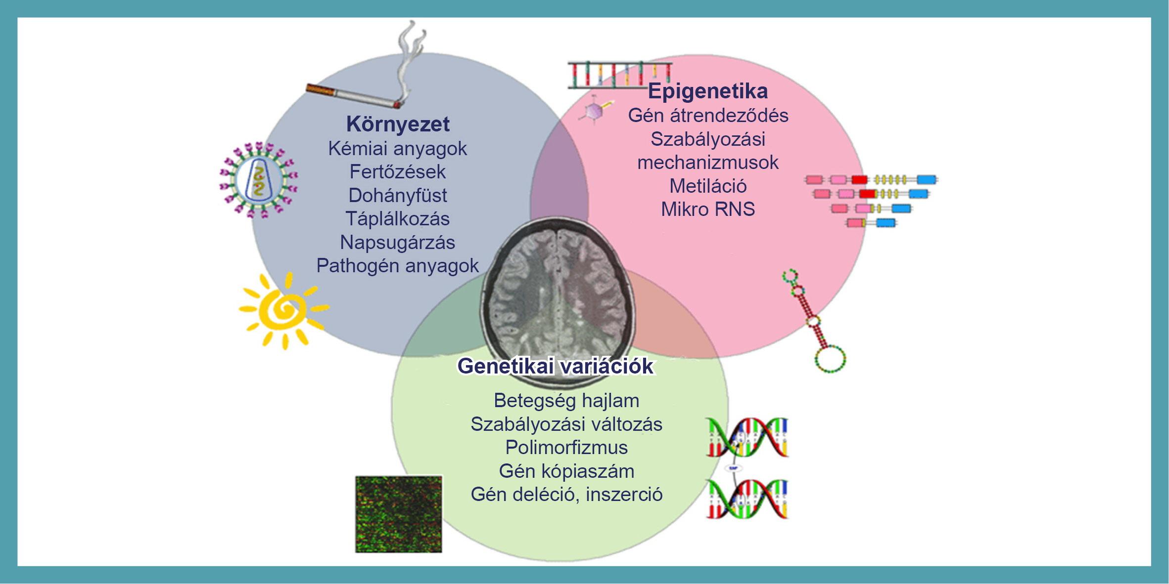 a rák genetikai hajlamú