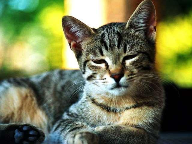 macskák rühének kezelése papillomavírus ember rák torok