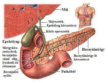 epevezeték rák tünetei)