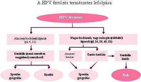 hpv gyógynövények