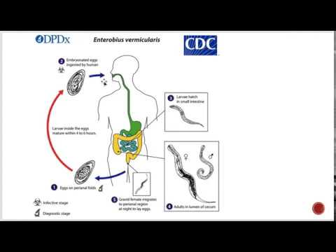 enterobius vermicularis meghatározása