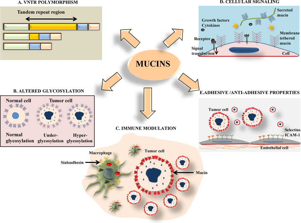 papilloma vírus kenet