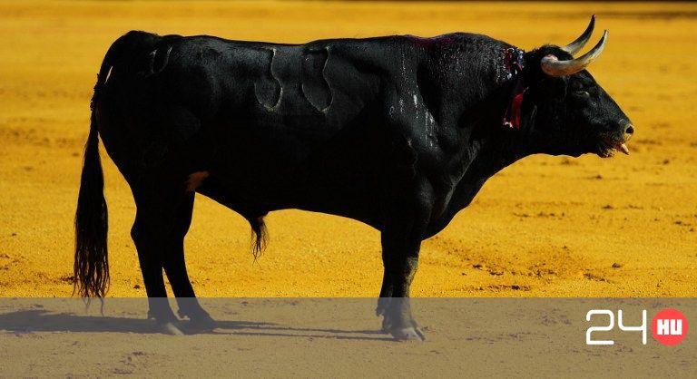 mutatja a bika bikát)