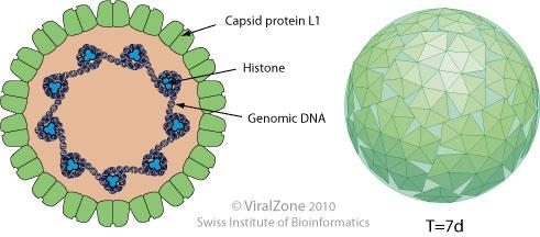 giardia bőr megnyilvánulásai a genitális szemölcsök condylomatosis