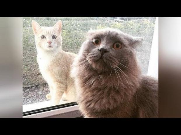 nevetéskezelés macskáknál