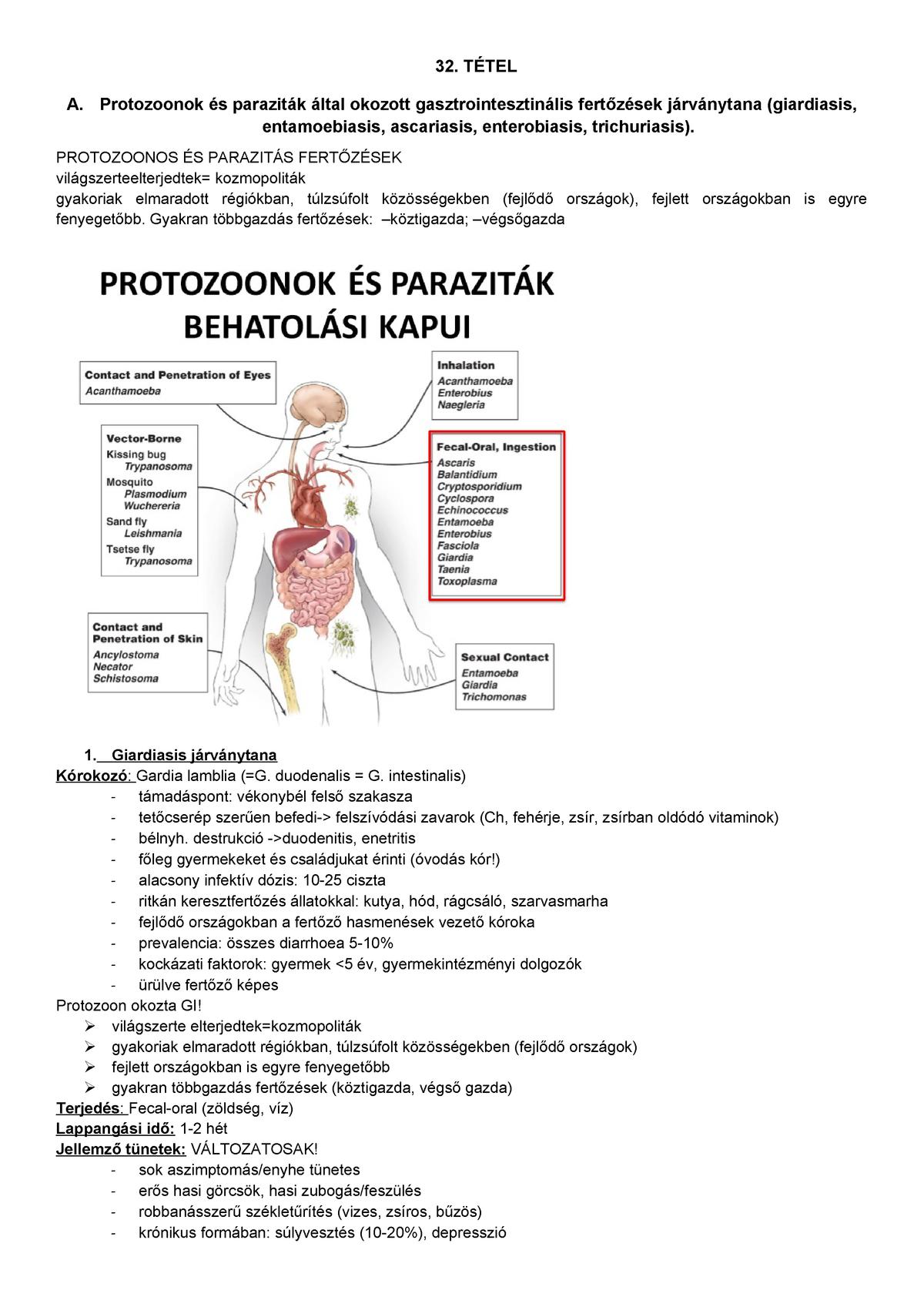 OTSZ Online - Schistosoma fertőzés Európában is - utazók figyelmébe! - Schistosomiasis paraziták