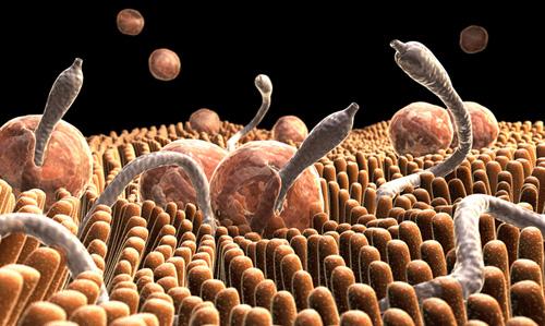 Három halálos kór ellen is hatásos lehet egy új szer