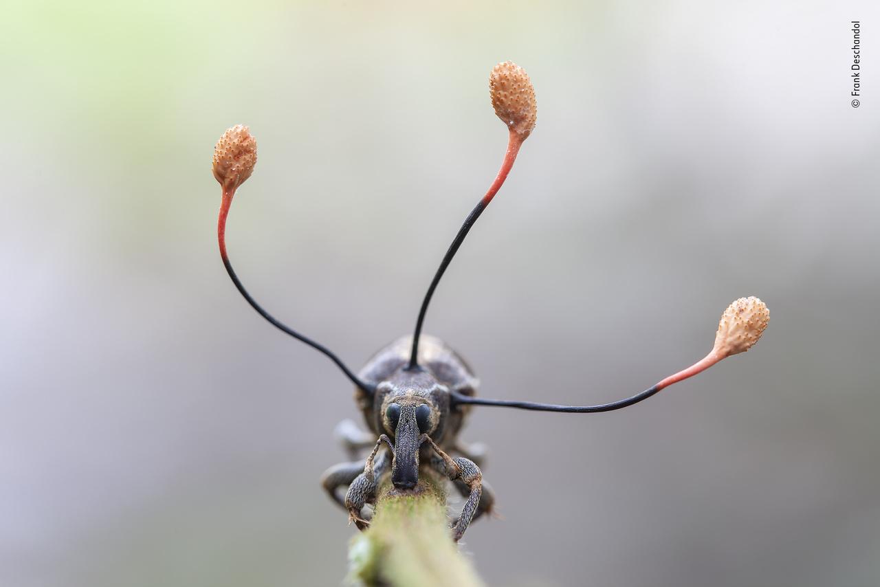 crevni paraziták csillognak