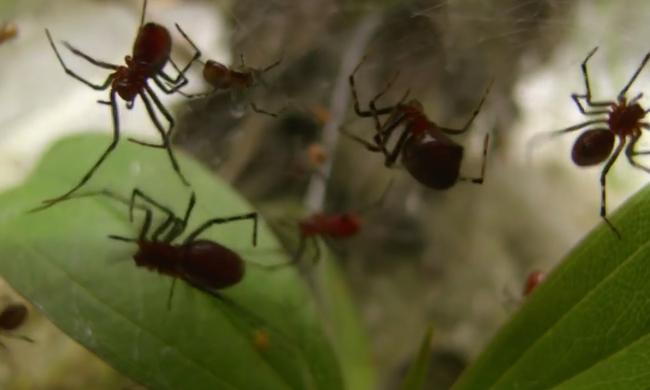 Nem a szexuális életük miatt fogod őket irigyelni – Avagy: a pókhálószoba titkai