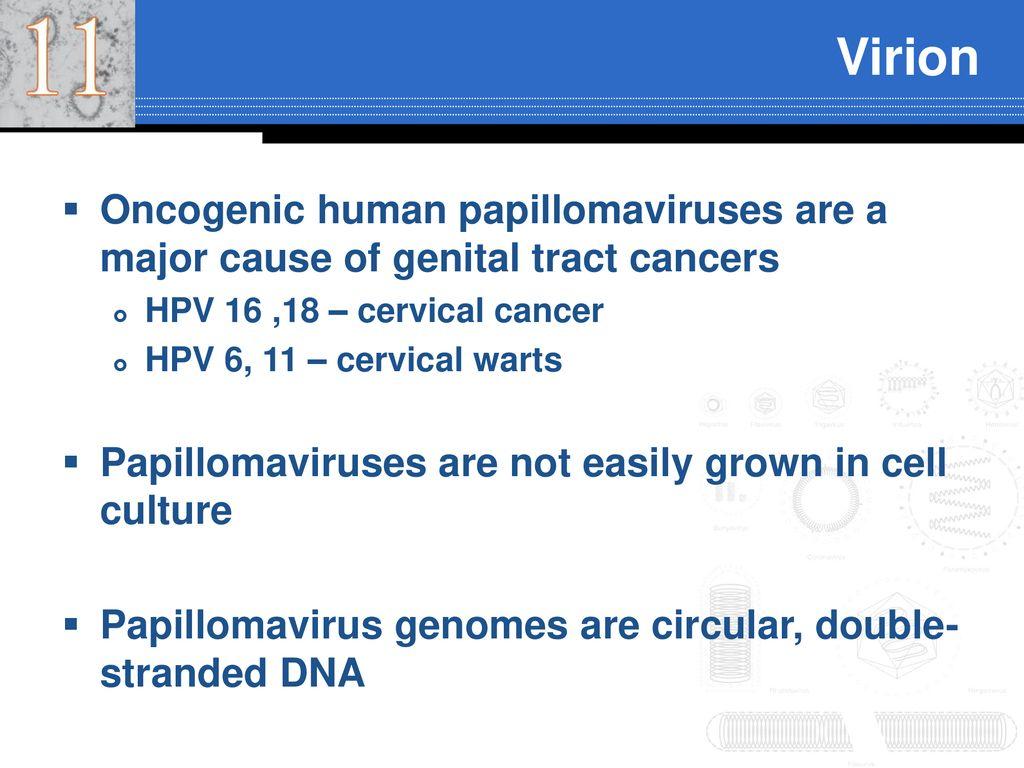 papillomavírus 6 11