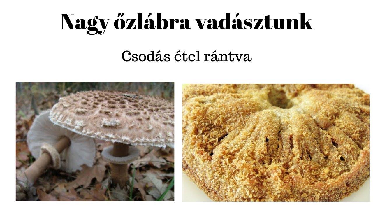 parazitaellenes bolhacseppek)