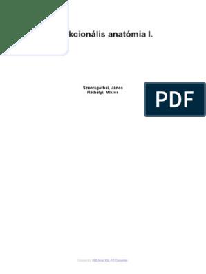 A combizmok: funkció és szerkezet