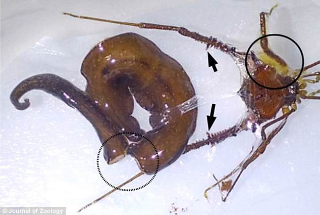 flapworm férgek)