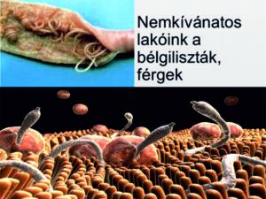 paraziták kezelése emberben módszerrel papilloma ne demek