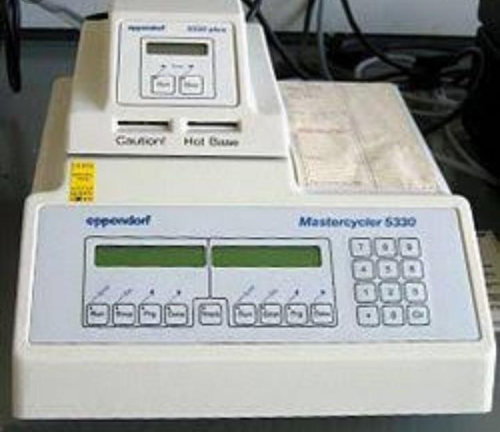 tesztbaktériumok otthoni kezelés pinworms