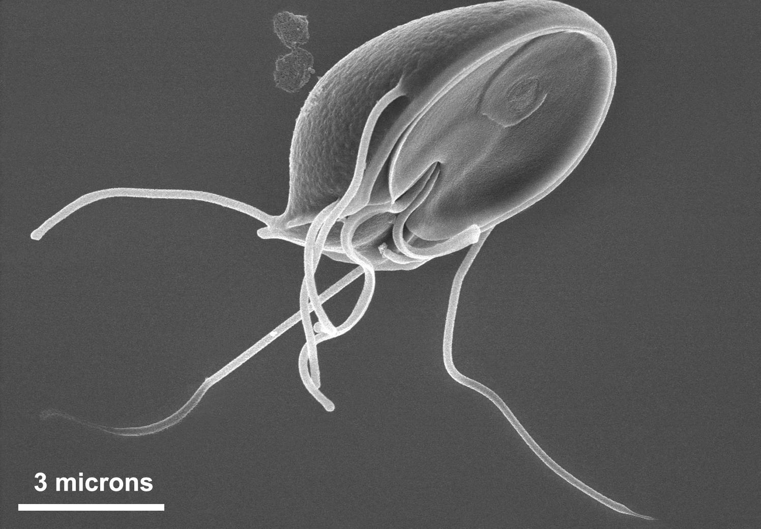 parazitaellenes szerek áttekintése