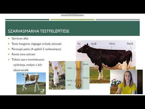 a papillomatosis a szarvasmarha kezelésében