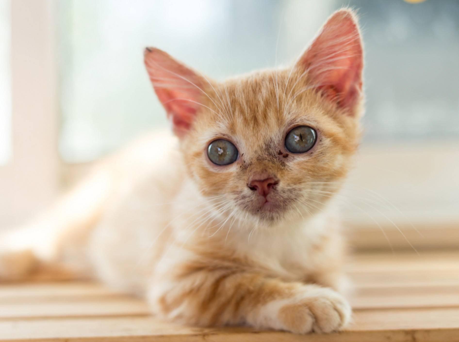 simptom de giardien bei katzen