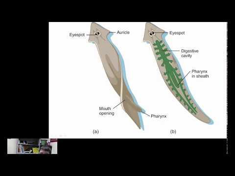 hogyan kell kezelni a parazitákat az emberi tüdőben