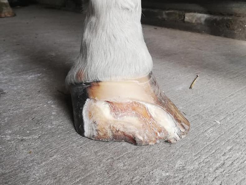 P. Dávid: 5 éve fennálló sebek mindkét láb ujjainak talpi felszínén