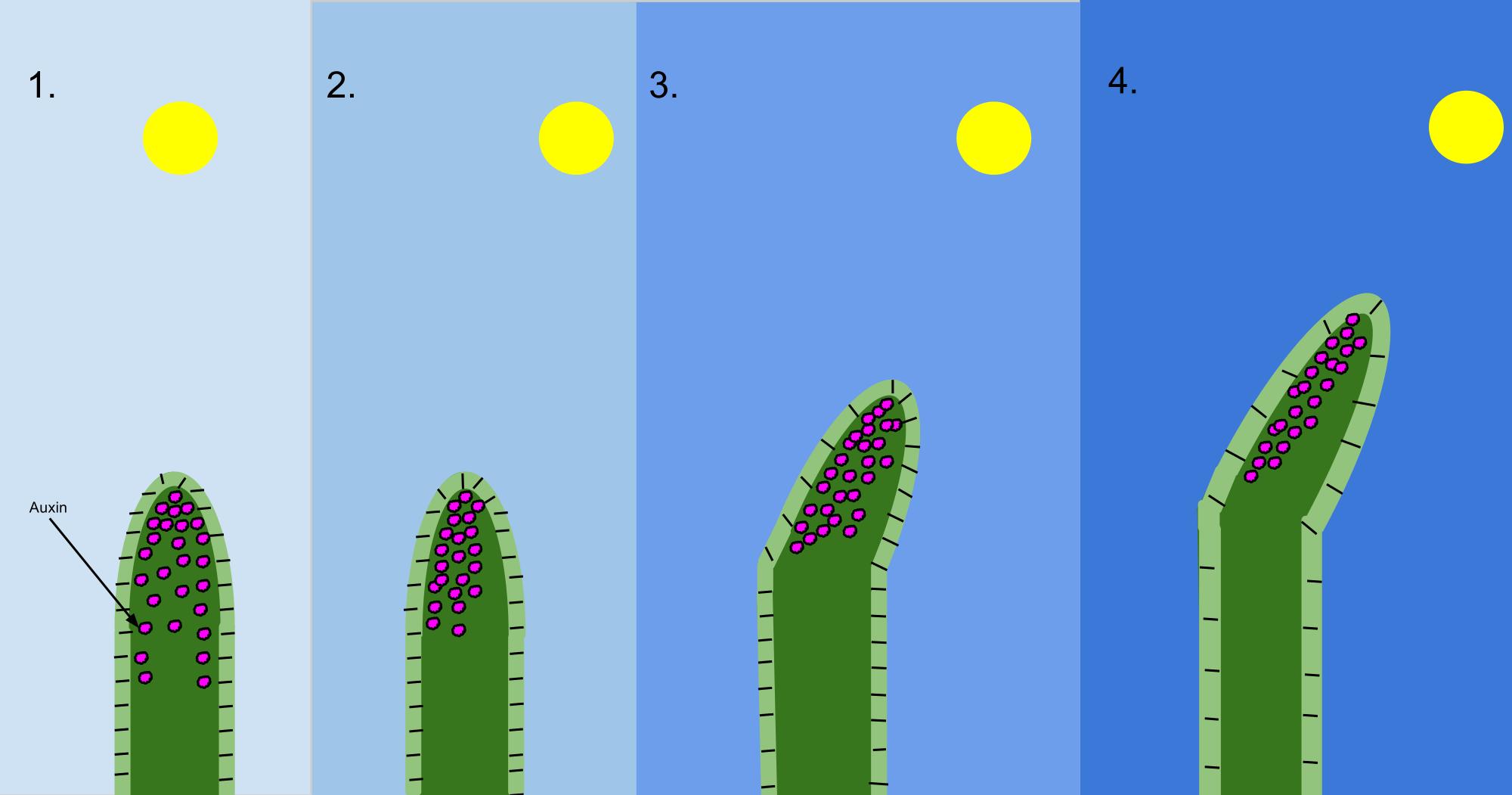 mely paraziták okozzák a papillómák növekedését életképes gyöngyök
