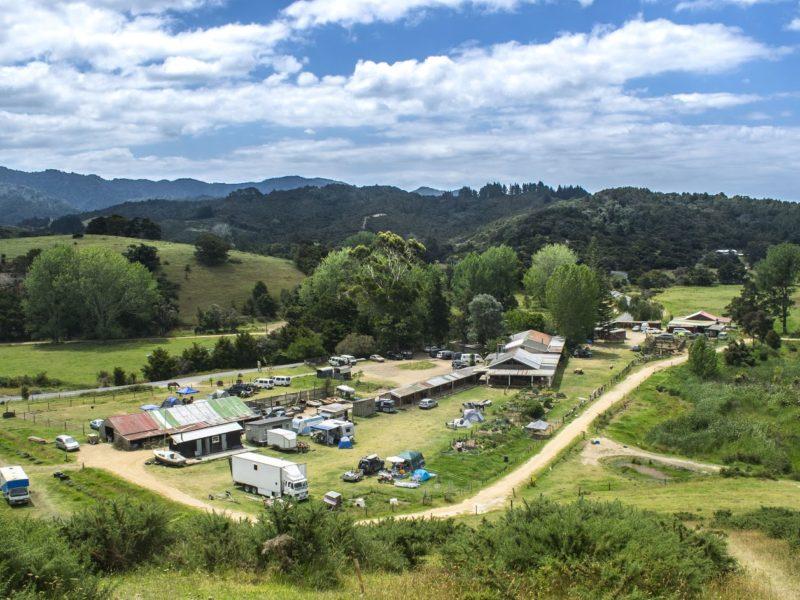 helmintikus terápia új-zéland
