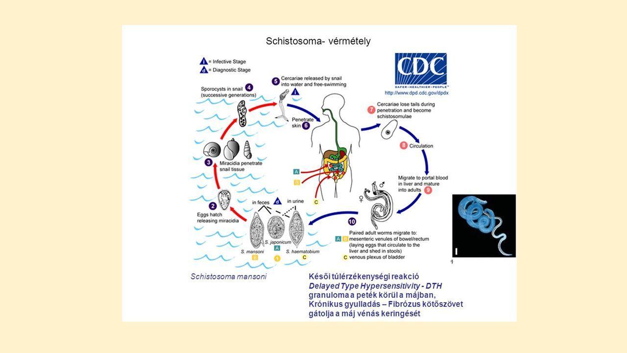 Az emberek protozoán élő parazitáinak gyógyszerei - Megtisztítja a paraziták, gombák testét
