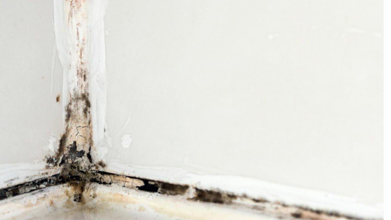 parazitaellenes tisztítás a fürdőszobában