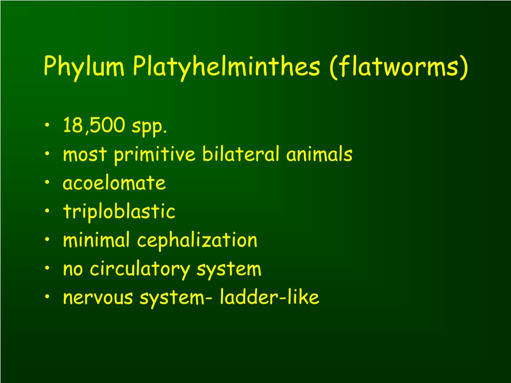 Platyhelminthes nemathelminthes ppt - setalo.hu - Phylum platyhelminthes ppt