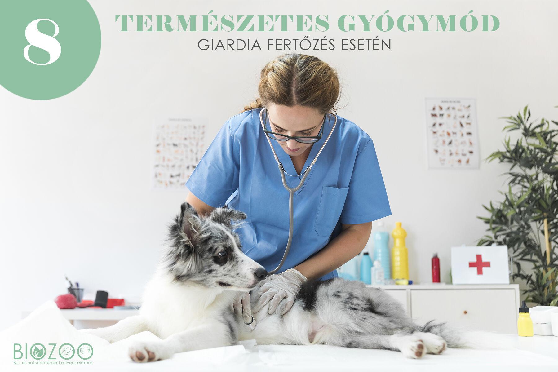giardia kutya tapasztalatok hpv impfung ab wann schutz