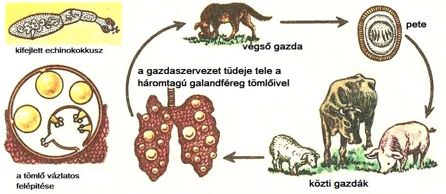 a kovaföld megöli a parazitákat)