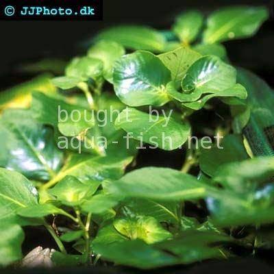 papilloma vírus kenet eldobható tabletták férgek ellen