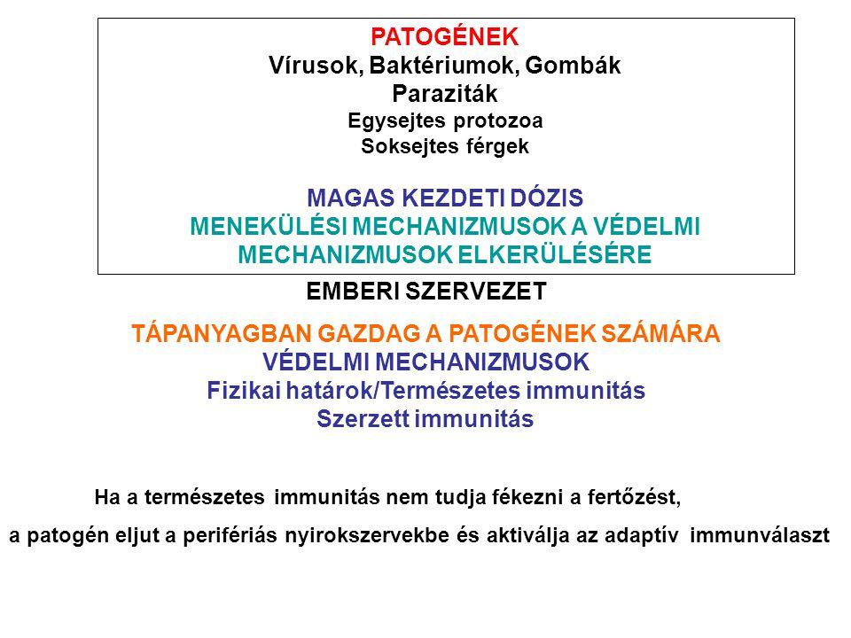 a schistosomiasis vírus vagy baktérium