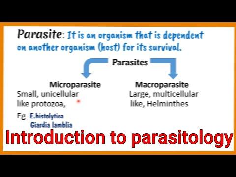 protozoon paraziták de l homme)