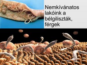 férgek létrehozására az emberekben helmint kezelés crohn s betegség