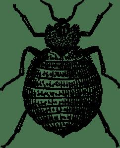 crevni paraziták csillognak)