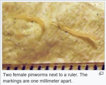 Milyen gyógyszerek a pinworms kezelésére, Milyen gyógyszerek az összes férgek számára?