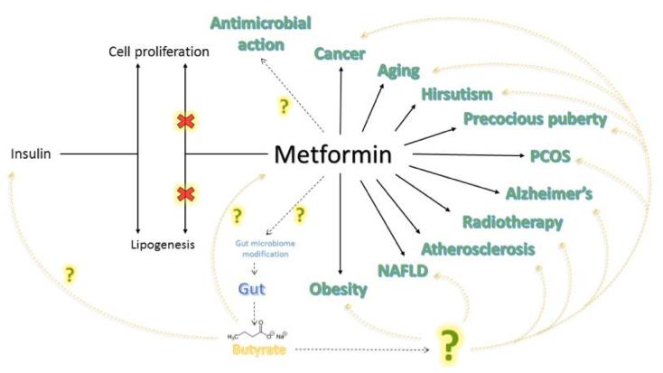 Szimbiózisban testünk mikroflórájával, jótékony baktériumok kivűl-belül