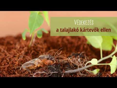 paraziták kezelése Kalinyingrádban miért jelennek meg férgek?