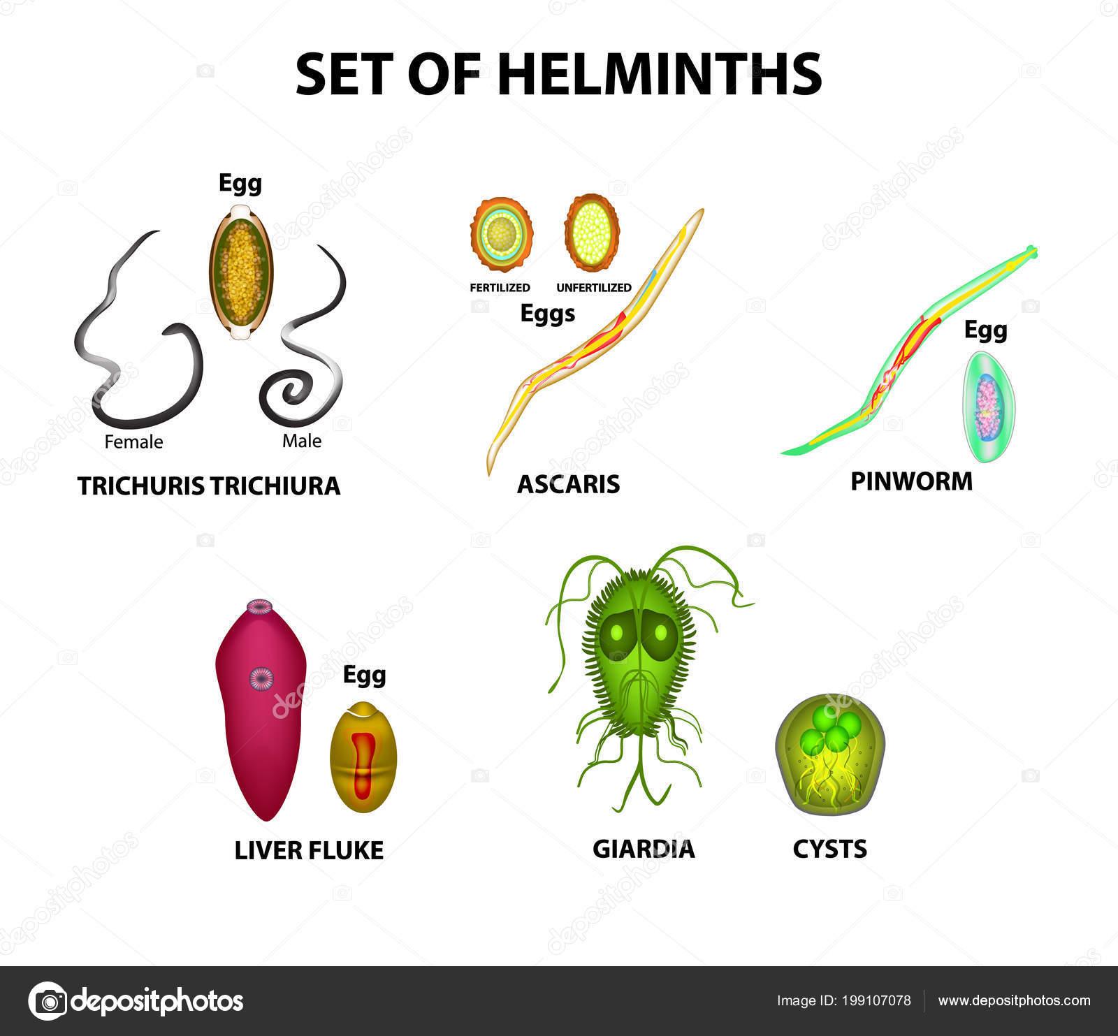 az emberi papillomavírus meghatározása