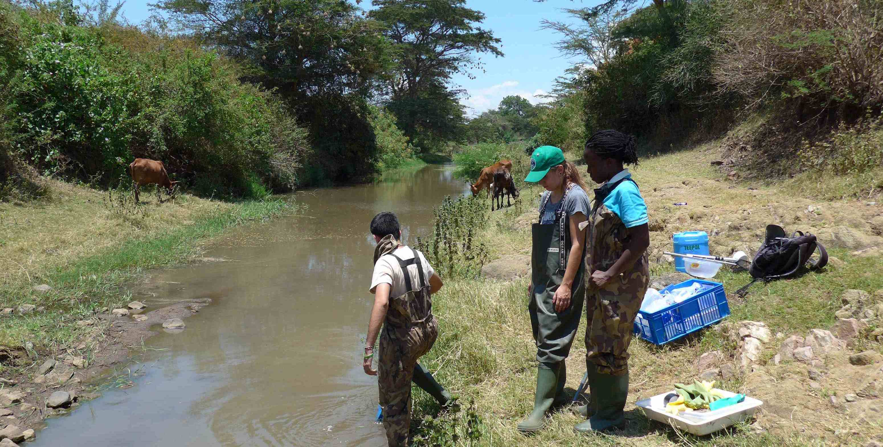 schistosomiasis kenia