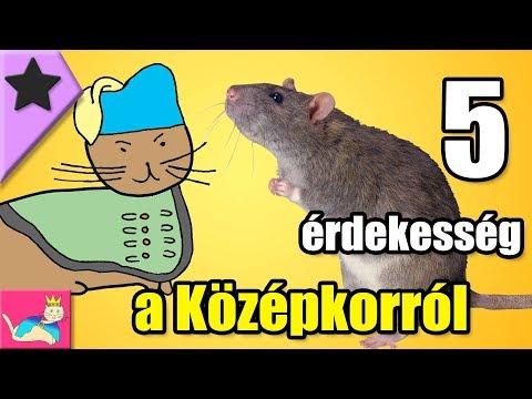 rágcsáló paraziták)