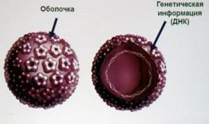 humán papillomavírus négyértékű rekombináns vakcina)