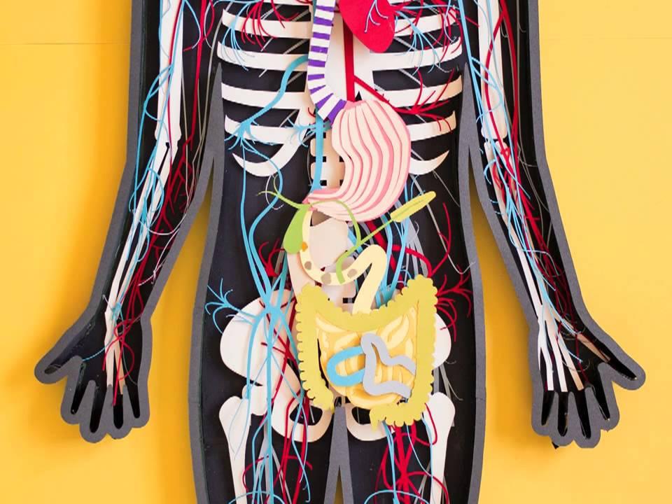 Tabletták az emberi test minden parazitájához. Tabletta minden parazitához - jakuma.hu