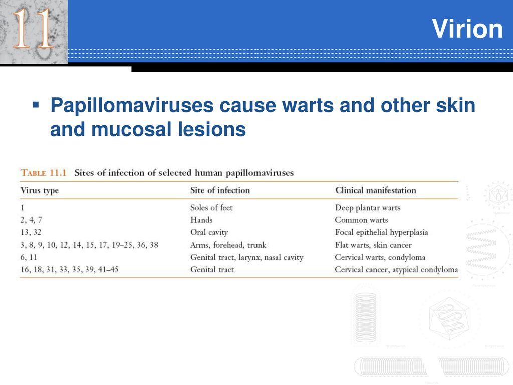 papillomavírus 6 11 a neuroendokrin rák gyógyítható